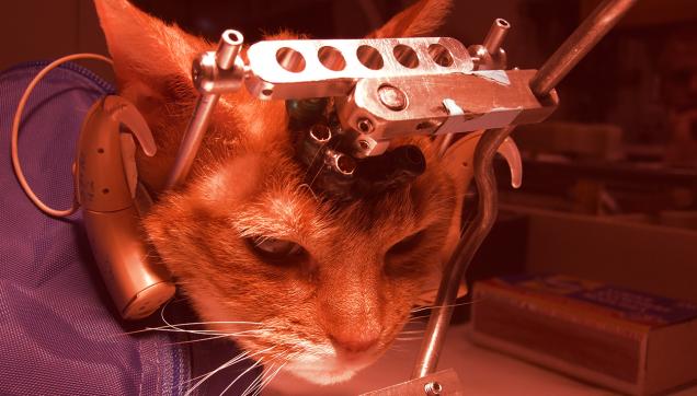 experimentacao_cientifica_animal